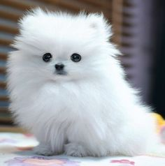 Little ball of fur!