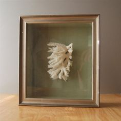 Vintage White Coral Shadow Box on Green