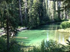 Protect the Okanogan-Wenatchee National Forest, WA by designating sensitive areas as wilderness.