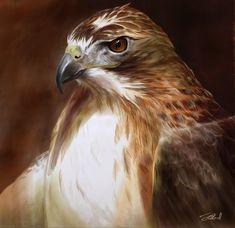 Red-Tailed Hawk Oil Painting by stevegoad.deviantart.com