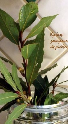 Λικέρ δάφνη - cretangastronomy.gr How To Make Drinks, Coffee Drinks, Plant Leaves, Homemade, Plants, Recipes, Food, Eten, Recipies