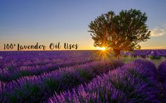 "Lavender essential oil is one of the most versatile of all essential oils. Lavender is widely considered ""the universal oil"" due to it's countless and wide-spread uses and benefit…"