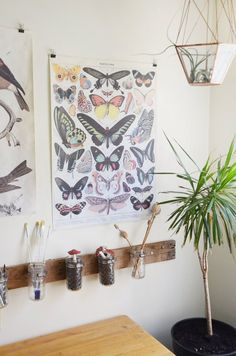 Caitlin & Dave's Oakland Apartment of Wonder & Oddities — House Tour | Apartment Therapy