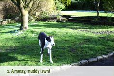 Artificial grass from the Grass Factory is the perfect alternative for those searching for a natural looking, hard-wearing lawn for every day of the year. Lawn, Grass, Dogs, Nature, Animals, Naturaleza, Animales, Animaux, Grasses