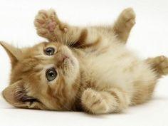 #Cats  #Cat  #Kittens  #Kitten  #Kitty  #Pets  #Pet  #Meow  #Moe  #CuteCats  #CuteCat #CuteKittens #CuteKitten #MeowMoe      #CuteCats...   https://www.meowmoe.com/27462/