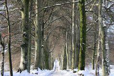 Snowy Tree-lined Avenue - Wall Mural & Photo Wallpaper - Photowall