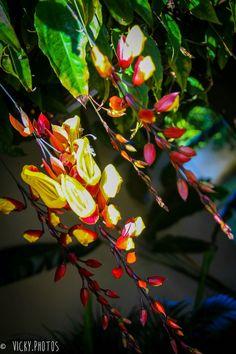 """""""Nem tudo na vida são flores ... Mas quando forem, regue-as!"""" #primavera #colors #flores #spring #hapiness @vicky_photos_infantis https://www.facebook.com/vickyphotosinfantis http://websta.me/n/vicky_photos_infantis https://www.pinterest.com/vickydfay https://www.flickr.com/vickyphotosinfantis"""