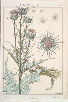 Chardon (Thistle)  designs by M.P. Verneuil and J. Milesi ( circa 1896). From 'Plante et ses Applications Ornementales.