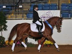 Lovely Warmblood Mare that is a proven Winner! Unbelievable quality and fancy movement with an active hind leg. Took YR through 2nd level with scores in the mid to high 60's. Current FEI passport that is the ultimate show horse!