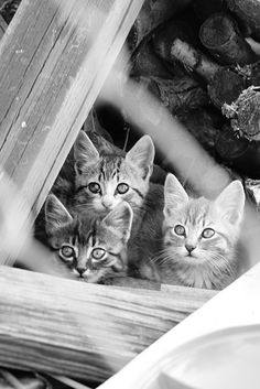 Kittens in the woods