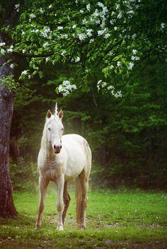 Unicorn, licorne