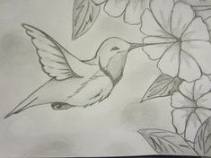 Hummingbird Drawings | Hummingbird Sketch by WOLFDEMON001 on deviantART