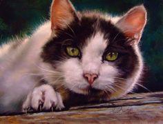 Old Tom, By Amanda Luck Baltzell