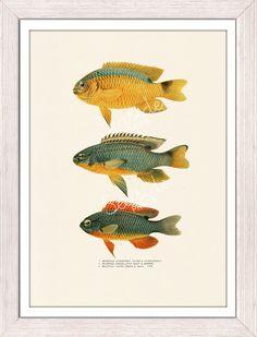 Vintage  fishes no.02- Sea fish collage- sea life print- free shipping. $12.00 USD, via Etsy.