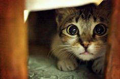 There is a definite pattern of cats with BIG eyes on my Pinterest page.