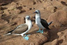 SEE Birds :: Galapagos Adventure - Penguins - Tortoises   Proceeds benefit wildlife conservation :: www.SEEtheWild.org