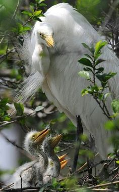 amaging birds pinterest | Amazing bird
