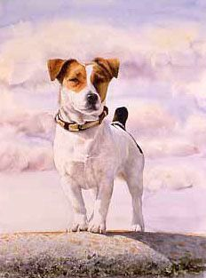 photo realistic portrait of a parson jack russell terrier