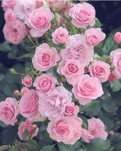 @ponyfony_flowersのInstagram写真をチェック • いいね!2,254件