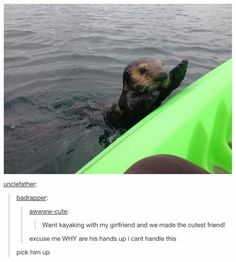 I think the reason otters do that with people is because when they were babies they were able to be picked up and now that they're big they can't. Now when they see something bigger (also friendly) than them, it's an automatic instinct. They're cuddlers.♡