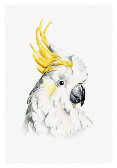 Stefan Gevers - Sulphur crested - greeting card Watercolor Bird, Watercolor Animals, Watercolor Paintings, Bird Drawings, Animal Drawings, Cool Paintings, Animal Paintings, Bear Sketch, Folk Art Flowers