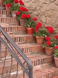 Used brick, aged terra cotta planters, and geraniums