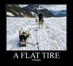 A FLAT TIRE. (In Alaska).