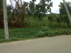 for sell, in Nias Island, only 2km from Sorake Beach  http://www.medaners.com/p/iklan.html