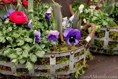 Moss lined basket tutorial. Flowers shown are pansy and ranunculus. Could add primrose too, great post!