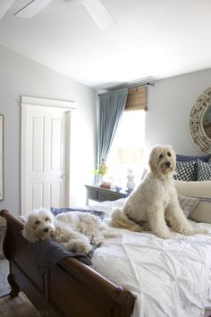 Cozy Fall Bedroom - Jack the Goldendoodle and Lily the Australian Labradoodle Labradoodles, Goldendoodles, Chien Goldendoodle, I Love Dogs, Cute Dogs, Animals And Pets, Cute Animals, Fall Bedroom Decor, Bedroom Ideas