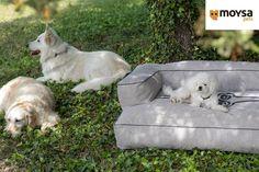 ¿Quieres prevenir artritis y enfermedades musculares en tu #perro? En Mundo animal puedes adquirir Moysa Hypnotic Luxe, una cama amplia y cómoda, perfecta para las necesidades de descanso y salud de tu #mascota.  http://www.mundo-animal.com/tienda/camas-para-perros/77-sofa-perros-hypnotic-luxe-antiartrosis-843530540093.html