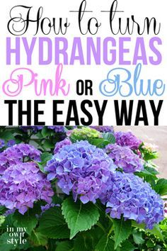 How to turn hydrangeas pink or blue the easy way. A great gardening tip by In My Own Style How to turn hydrangeas pink or blue the easy way. A great gardening tip by In My Own Style Hortensia Hydrangea, Hydrangea Care, Hydrangeas, Blue Hydrangea, Hydrangea Color Change, Outdoor Plants, Outdoor Gardens, Container Gardening, Gardening Tips
