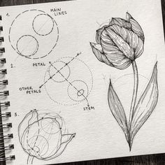 How to Draw More Realistic (Easy Drawings Realistic Flower Drawing, Tulip Drawing, Easy Flower Drawings, Flower Drawing Tutorials, Plant Drawing, Realistic Drawings, Easy Drawings, Art Tutorials, Botanical Drawings