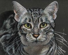 Colored Pencil Egyptian Mau Cat Drawing by Portraitsbyaleks, $275.00