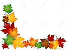 Maple Leaves In A Variety Of Autumn Or Fall Colors With Shadows ...
