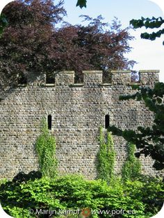 Castle wall with ivy and tree Castle Pictures, Castle Wall, School Play, Cardiff, Cathedrals, Palaces, Towers, Castles, Ivy