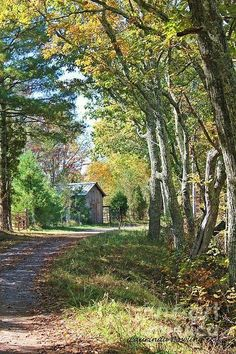 Country road (Virginia) by Laurinda Bowling cr. Cenas Do Interior, Country Life, Country Roads, Landscape Photography, Nature Photography, Beautiful Places, Beautiful Pictures, Forest Path, Country Landscaping