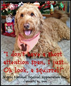 I don't have a short attention span, I just.....Oh look, a squirrel!  National Squirrel Appreciation Day January 21, 2014
