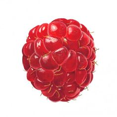 "Raspberry by Anna Mason - 6"" square print"