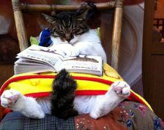 KEDİLER VE KİTAPLAR | Eskimeyen Kitaplar  #book #cat #kedi #kitap