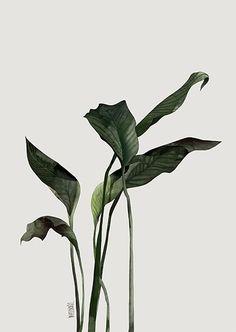 FoliageComposition 2 by Agata Wierzbicka