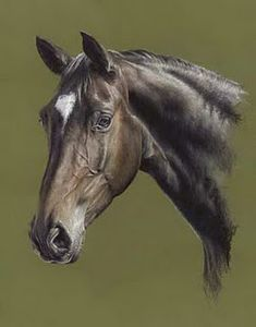 Draw Horses 'Bella' horse pastel painting by Mary Herbert - Horse Drawings, Animal Drawings, Horse Pictures, Pictures To Paint, Pretty Horses, Beautiful Horses, Watercolor Horse, Horse Oil Painting, Horse Anatomy