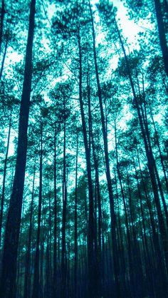 #folkgreen #moodygrams #lifefolk #pine