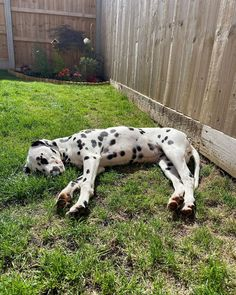 Dalmations, Dalmatian Dogs, Sunny Afternoon, Puppy Love, Creatures, Dots, Puppies, Future, Architecture