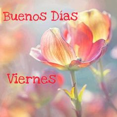 Viernes Friday, Plants, Movie Posters, Frases, Good Morning Friday, Life, Photos, Good Morning, Film Poster