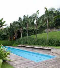 rectangle pool, awesome surround, palm trees, love it all.