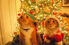 We haven't touched the tree .. we're being very good for Santa ♥