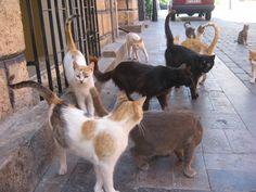 トルコの猫は、世界遺産も出入り「自由にゃ」(画像集)