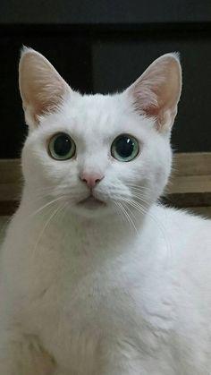 「猫忍」ドラマ版に友情出演するあなご。