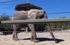 Toronto Zoo Elephants Finally Arrive in California
